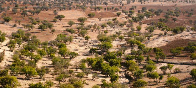 argan olie uit marokko